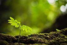 Forest / by Hiro Nagachan