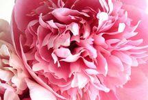 flowers & garden / by Leah FricknFrack