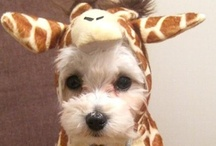 costumes for animals / by Suzy