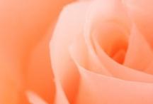Peachy Keen ❤❤ / by ♥♥ Melissa ~ Ann ♥♥