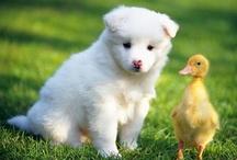 adorable animals! / by Karla Herrera