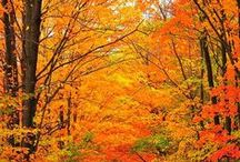 Autumn Leaves &  Fall Scenery / by Karen Alley
