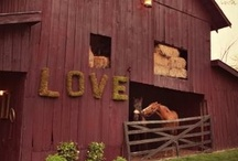Equine Barns / by Joy Koritz