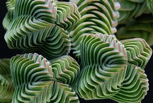 Succulents / by Kathleen Gick