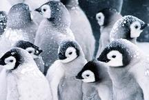 School // Penguins & Polar Animals / by Molly Ortner