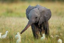 animals / The most wonderful creatures in our world! / by V