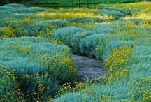 Soft Plantings / by HEDGE Garden Design & Nursery