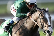 Horse racing & Thoroughbreds / by Lucka Royal