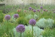 Gardening ideas / Inspirations for the Garden / by Antique Garden