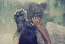 Big Cat's / by Menina isCrazy