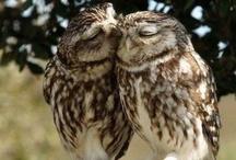 Owls / by Evelyn de Carballo