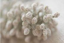 beauty of crochet / by Ruta Naujalyte