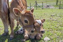 Farm Animals / by Stow Kent Animal Hospital
