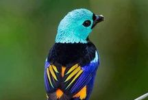 Birds for Bradley / by * Harpreet Bhamrah *