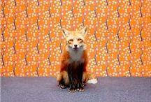 Animals: Quick Brown Fox / Fox, foxes, foxy / by Sarah Davis