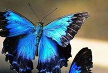 butterfly in the sky / by joyce pettiford