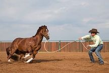 Horsemanship / by Alexis Cook