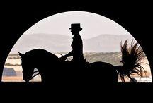 Le monde équestre /  And beauty horses ! / by Isabelle Carrasco Vattaire
