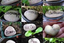 Seeds / by Bridget @ Holland Bulb Farms