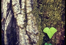 Hearts Are Everywhere / I've been collecting hearts since 2006. I see them everywhere and I believe they're tiny little confirmations, messages from the universe that Love is all around. Here are a few of my favorites…enjoy! / by Kelly Rae Roberts