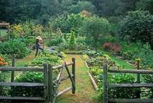 Garden | Grow / Gardening, landscape,vegetables, flowers, planting, growing. / by Amanda Watkins