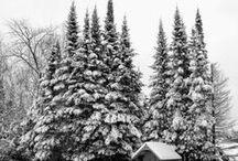 Winter / The snowy season. / by Amanda Watkins