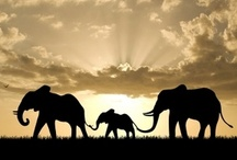 Elephants<3 / by Fe Diaz