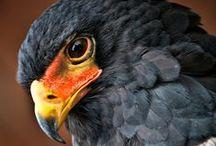 Birds of Prey / by ϟ P@UL ϟ