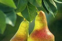 Fruits / by Edilene Paiva