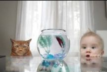 Babies & Animals / by Healthy Home Company