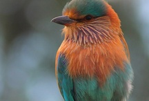 birds / by kimberly lombardo