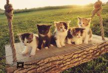 So cute!! / by Brooke Dekker