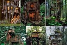 ALL TREE HOUSES / by Deborah Henderson