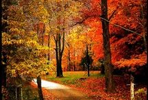Oh Fall how we LOVE thee... / Fall and all of its goodies! / by Versteel®
