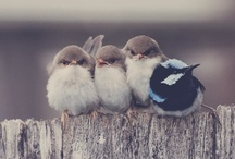 i want them all / by a random bird