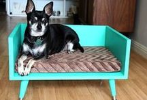 Home is Where your Pet is. / by Great Plains SPCA