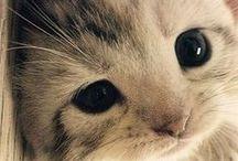 :: Kitty ~ / by Eduardo Godoi