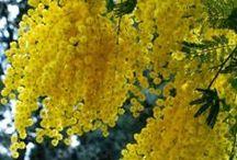 """""""BREATH TAKING FLOWERS"""" / by Sherrie Gordon"""