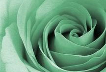 ►Mint / ...and shades in between.  / by Blue Savannah