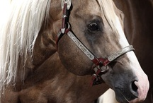 My Personal Horse Hall of Fame  / by Christy Fleener