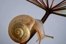 Snails (real only) / Please note that artistic representations of snails are on a separate board, Snail Art. I invite you to visit all of my boards. Many are related to art, nature, or a combination of both. / by Natalie Gorvine