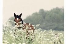 Pet (: & animals / by Kimberly Fullbright