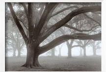 Tree Art - Photos / by J.M