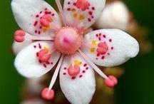 Le Fleur / by Sherry Walker