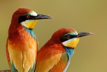 animals/birds / by mary l hager