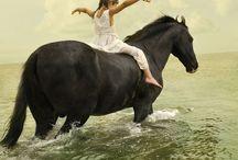 ANIMALS...Horses 'n Kinfolk 1. / by Ronnie Turner