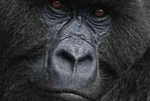 ANIMALS...Primates / by Ronnie Turner