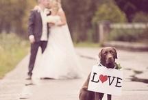 animals / by wedding decor