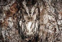 OWLS I LOVE / OWLS / by Susan Maze