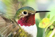 HUMMINGBIRDS / by Susan Maze